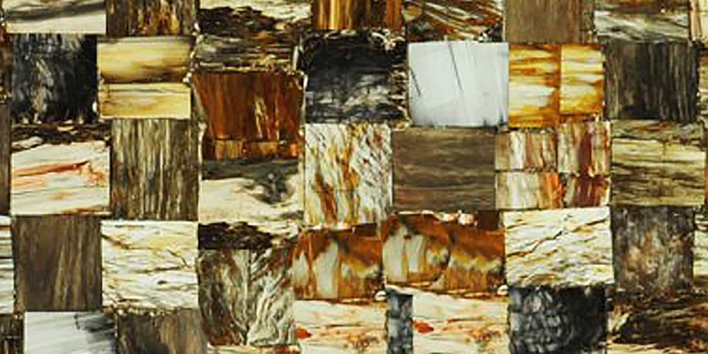 Akam Petrified Wood Jurassic